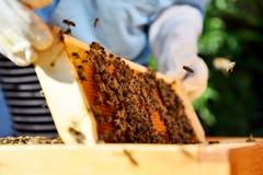 El apicultor lleva a cabo las células de una miel con las abejas en sus manos Fotos de archivo libres de regalías