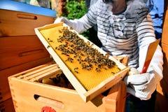 El apicultor lleva a cabo las células de una miel con las abejas en sus manos Fotos de archivo