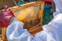 El apicultor lleva a cabo un marco de la colmena en sus manos Fotos de archivo