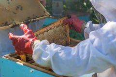 El apicultor lleva a cabo un marco de la colmena en sus manos Foto de archivo