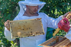 El apicultor lleva a cabo un marco de la colmena en sus manos Fotografía de archivo