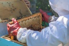 El apicultor lleva a cabo un marco de la colmena en sus manos Imagen de archivo