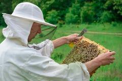 El apicultor lleva a cabo una célula de la miel con las abejas en sus manos Apicultura apiary fotografía de archivo libre de regalías