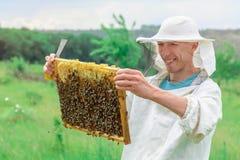 El apicultor lleva a cabo una célula de la miel con las abejas en sus manos Apicultura apiary Imágenes de archivo libres de regalías
