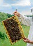 El apicultor lleva a cabo una célula de la miel con las abejas en sus manos Apicultura apiary Foto de archivo