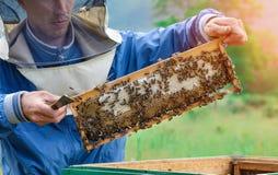 El apicultor lleva a cabo una célula de la miel con las abejas en sus manos Apicultura apiary Foto de archivo libre de regalías