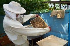 El apicultor mira el marco Imagenes de archivo