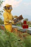 El apicultor mira la cámara con el panal Imágenes de archivo libres de regalías