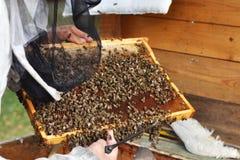 El apicultor prepara la miel de la cosecha de la colmena Imágenes de archivo libres de regalías