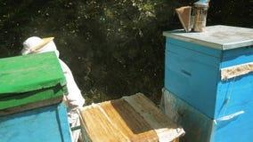 El apicultor que trabaja en las abejas del colmenar vuela el vídeo de movimiento lento coloreado multi de la forma de vida de la  metrajes