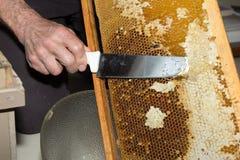 El apicultor quitó las abejas del panal Foto de archivo libre de regalías