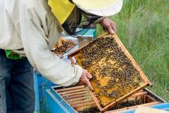 El apicultor saca del panal de la colmena con las abejas Apicultura Imagenes de archivo