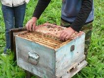 El apicultor saca la célula de la colmena de madera Foto de archivo