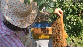 El apicultor saca un marco de la miel de la colmena almacen de metraje de vídeo