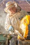 El apicultor se ocupa las abejas, panales, mucha miel, en un concepto protector de la bestia del ` s del apicultor: colmena de la Fotos de archivo