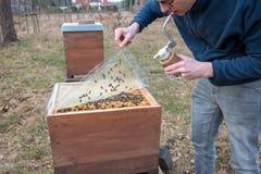 El apicultor se ocupa a su colonia de la abeja levantando una cubierta plástica imágenes de archivo libres de regalías