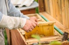 El apicultor sostiene una caja de la abeja con una colmena Foto de archivo libre de regalías