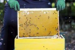 el apicultor toma el marco con los panales y la miel de la abeja en una ropa protectora especial Foto de archivo libre de regalías