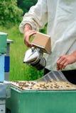 El apicultor trabaja con las abejas cerca de las colmenas Apicultura Fotos de archivo