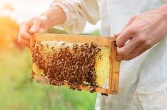 El apicultor trabaja con las abejas cerca de las colmenas Apicultura Imagenes de archivo