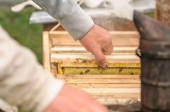 El apicultor trabaja con las abejas y las colmenas en el colmenar Capítulos insertados en la colmena Fotos de archivo libres de regalías