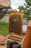 El apicultor trabaja con las abejas y las abejas en un colmenar, en aire fresco Imágenes de archivo libres de regalías