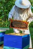 El apicultor ve la colmena Imágenes de archivo libres de regalías