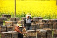 El apicultor, violación y las abejas Imagenes de archivo