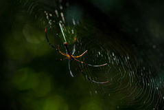 El arácnido de la araña se sienta en su guarida en fondo negro imagenes de archivo