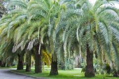El arboreto del parque imagenes de archivo