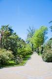 El arboreto del parque Imagen de archivo libre de regalías