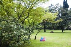 El arboreto del parque Imagen de archivo