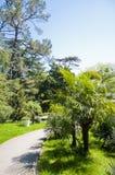 El arboreto del parque Imágenes de archivo libres de regalías