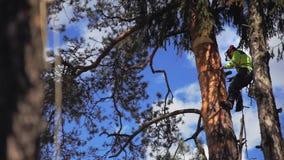 El arborista desciende de un árbol almacen de video