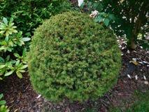 El arbusto Foto de archivo