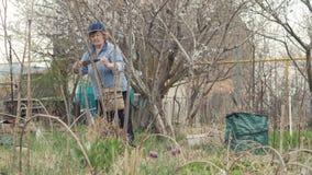 El arbusto mayor del sawing del jardinero de la mujer ramifica mientras que trabaja en jardín del campo metrajes