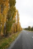 El arce al lado del camino Foto de archivo