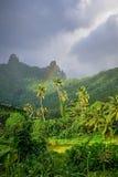 El arco iris en selva de la isla de Moorea y las montañas ajardinan Fotografía de archivo