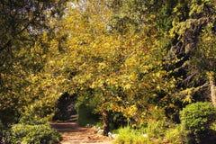 El arco natural de las ramas de árbol en el parque del otoño Foto de archivo