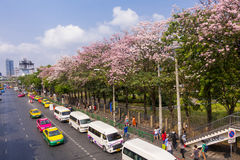 17 el arpil 2016, Bangkok, florece fila rosada del árbol, delante del parque a Fotos de archivo