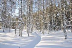 El arroyo congelado Fotos de archivo libres de regalías
