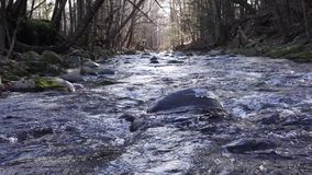El arroyo de la charla fluye cuesta abajo en el coto del parque de Catskills almacen de video