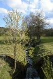 El arroyo en el medio del pasto alineó por los árboles, República Checa, Europa Imagenes de archivo