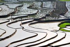 El arroz colgante coloca con agua en MU Cang Chai Imágenes de archivo libres de regalías