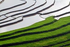 El arroz colgante coloca con agua en MU Cang Chai Fotos de archivo libres de regalías