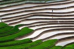 El arroz colgante coloca con agua en MU Cang Chai Imagen de archivo libre de regalías