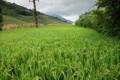 El arroz coloca en China septentrional, contextos imponentes d Y Imagen de archivo libre de regalías