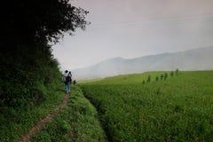 El arroz coloca en China septentrional, contextos imponentes d Y Fotos de archivo libres de regalías