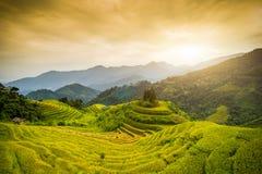 El arroz coloca en colgante de Hoang Su Phi, Vietnam Imagenes de archivo
