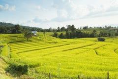 El arroz coloca en colgante de Mae Chaem, Ching Mai, Thaila septentrional Fotos de archivo